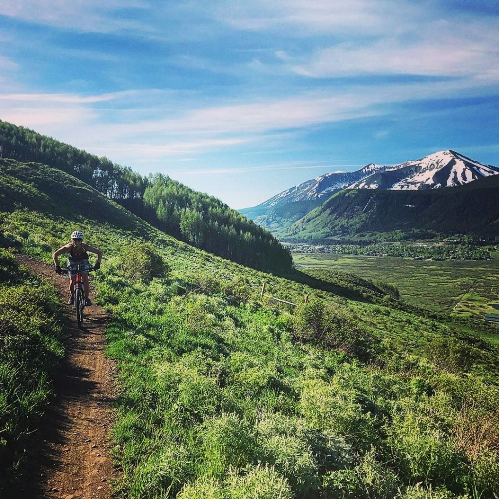 lupine trail crested butte
