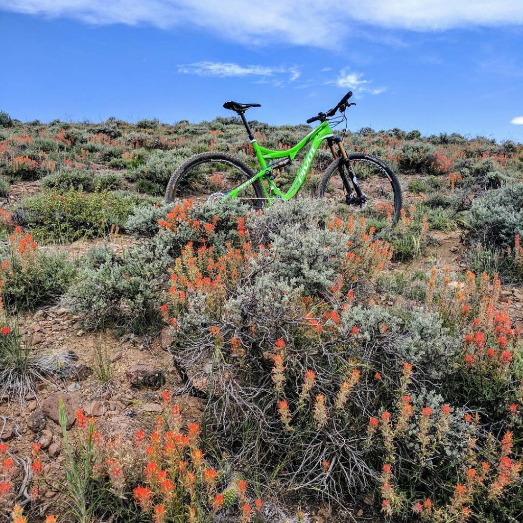 bike and wildflowers at hartman rocks