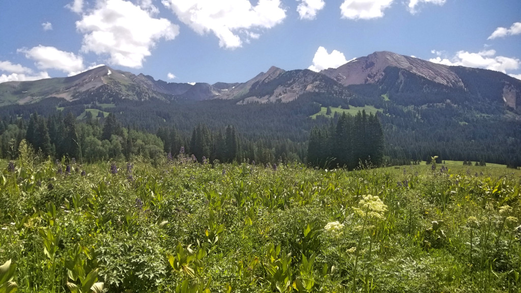 Wildflowers and mountains 401 trail