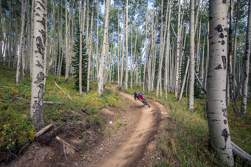 solo mountain biker riding a bermed downhill trail in a forest of aspens